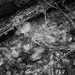 Epping Forest // Spiderweb