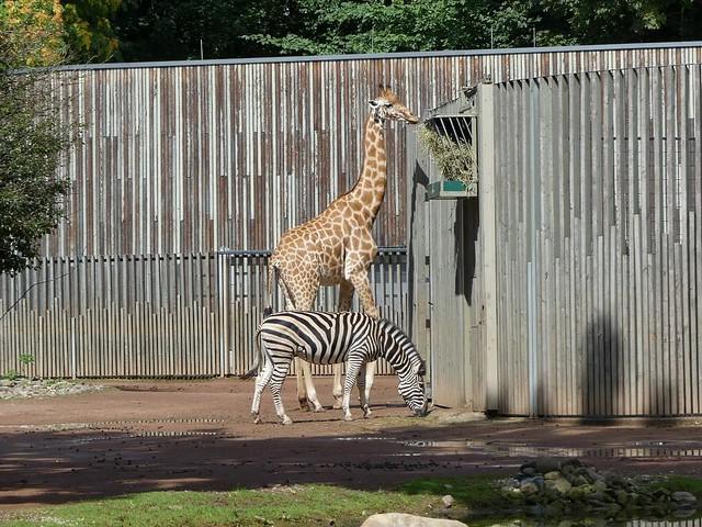 Afrikaanlage, Zoo Dresden