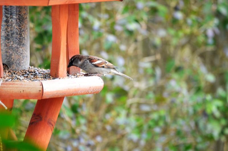 Sparrows 23.02 (4)