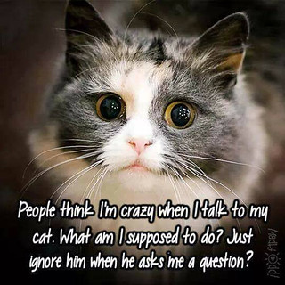 do you talk to your cat?