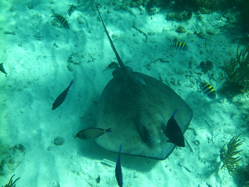 Aqua Point Cayman Islands