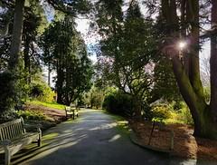 The Pinetum at Birmingham Botanical Gardens