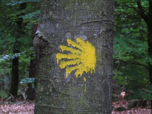 20140804 02 500 Jakobus Wald Baumstamm Rinde Muschelstern_K