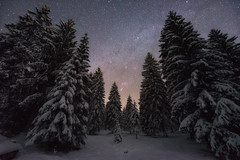 Winter forest & Orion
