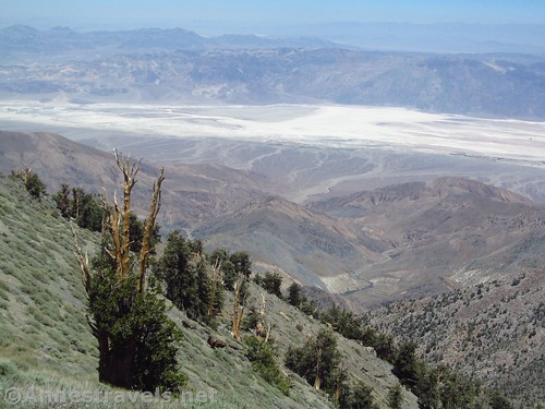 Badwater Basin and Bristlecone Pines along the Telescope Peak Trail, Death Valley National Park, California