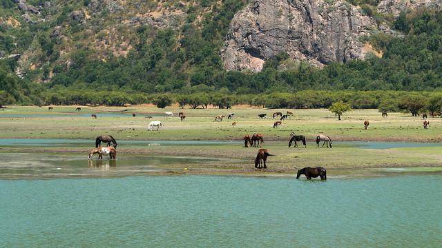 Pferde im See