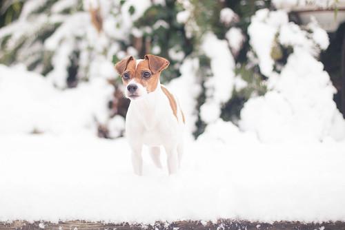 February Snow-8406