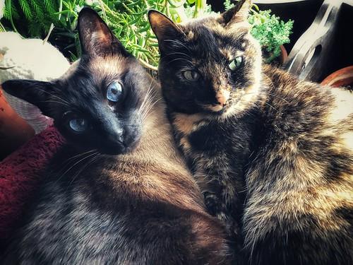 Bella and Lolita