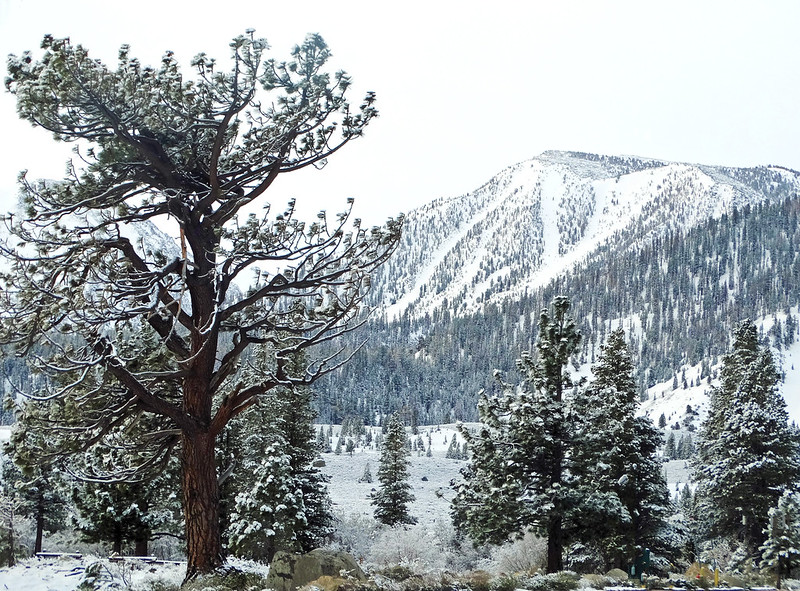 Spring Snow in Mammoth Lakes, CA 5-17