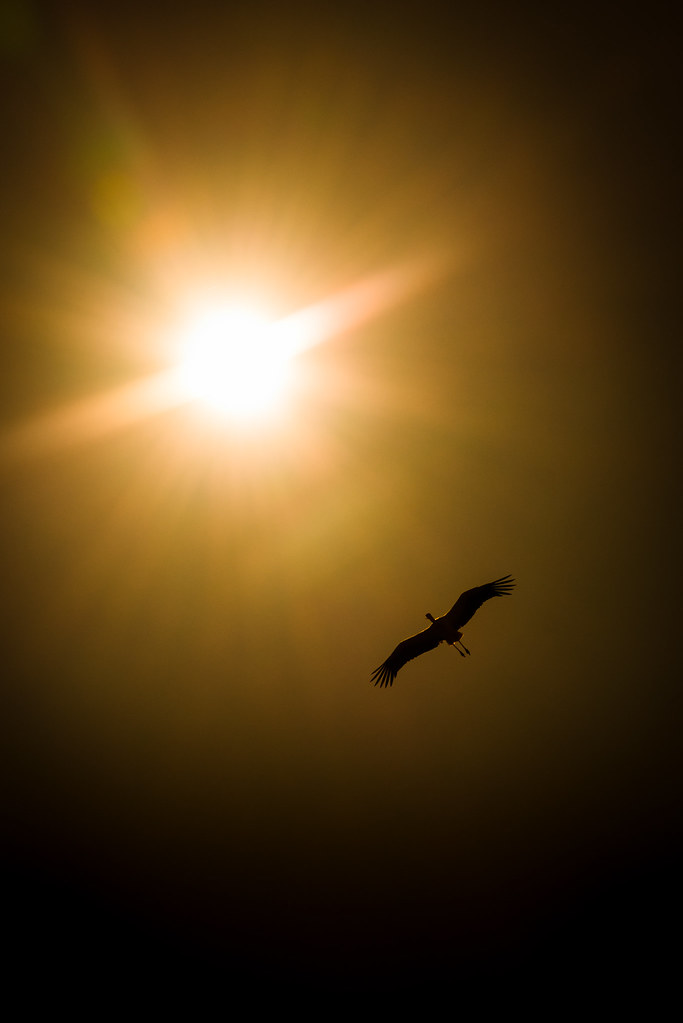 White Stork Silhouetted by the Algarve Sun