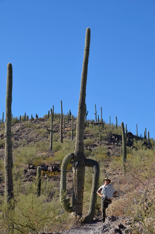 Tucson Gilber Ray Brown Mountain Saguaro and Linda