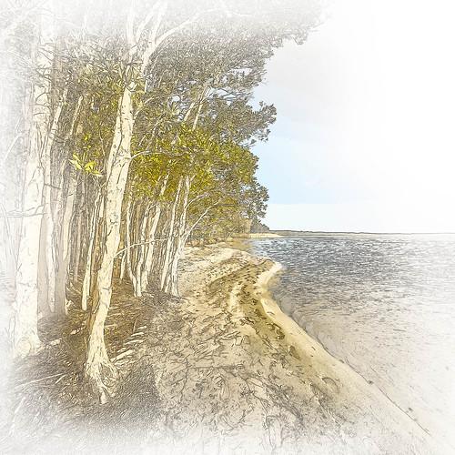 Lake's Edge Sketch