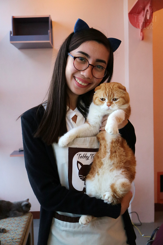 Tabby Town Cat Cafe