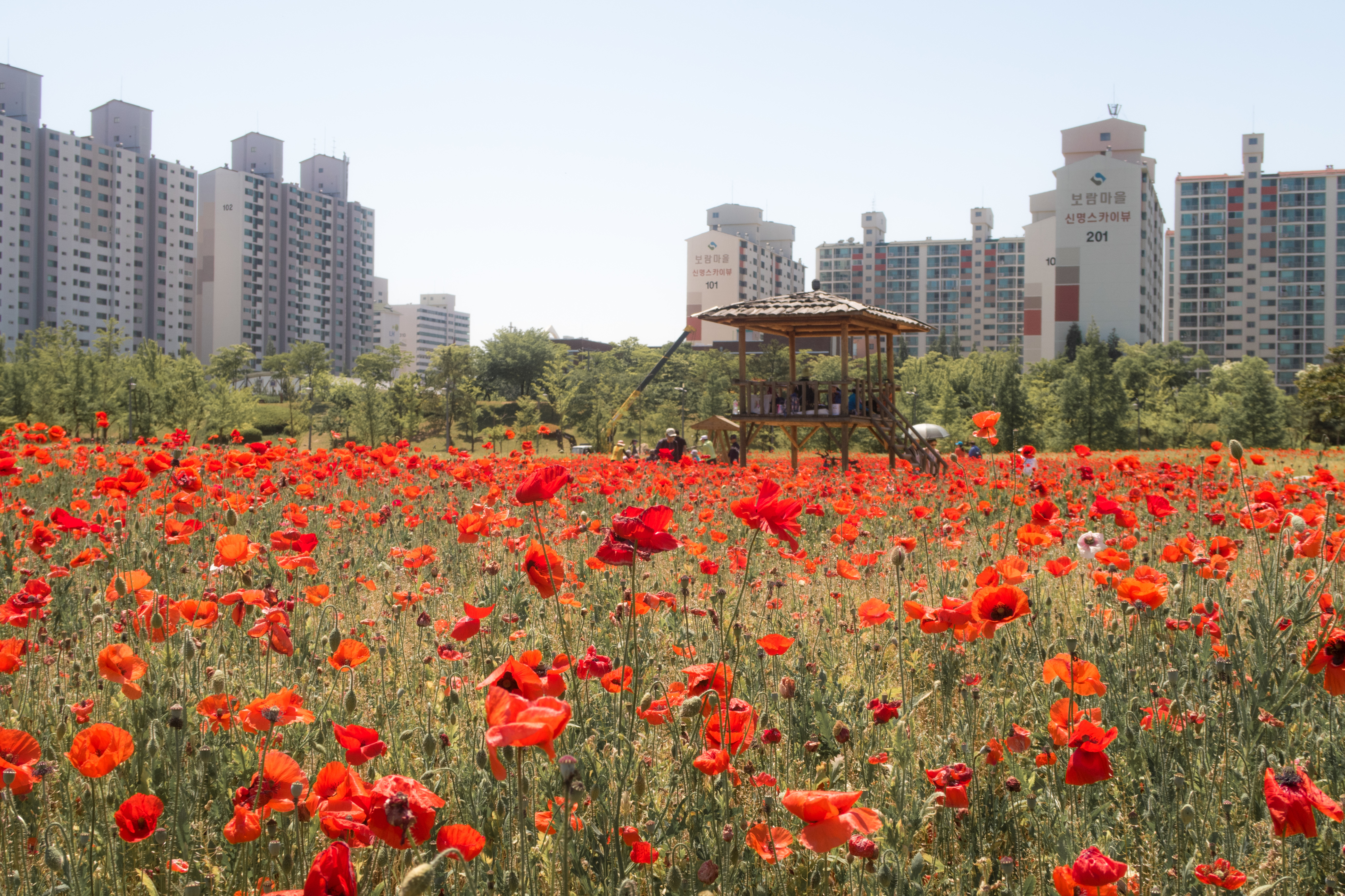 Seoraeseom Sangdong Lake Park