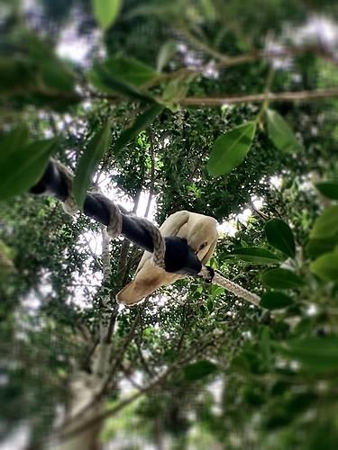 Some kind of cockatoo.