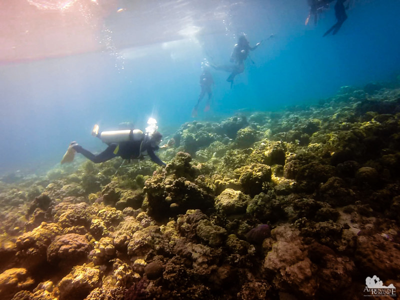 Taking care of our reefs