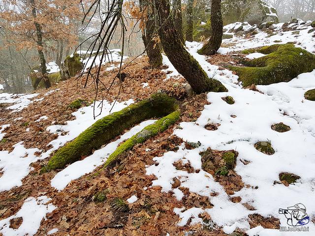 Necrópolis de Revenga y La Cerca con nieve 29