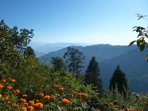 india asia autumn october darjeeling view hills himalayas foothills flowers marigolds trees forest sky nikon northeast 2016 d5300
