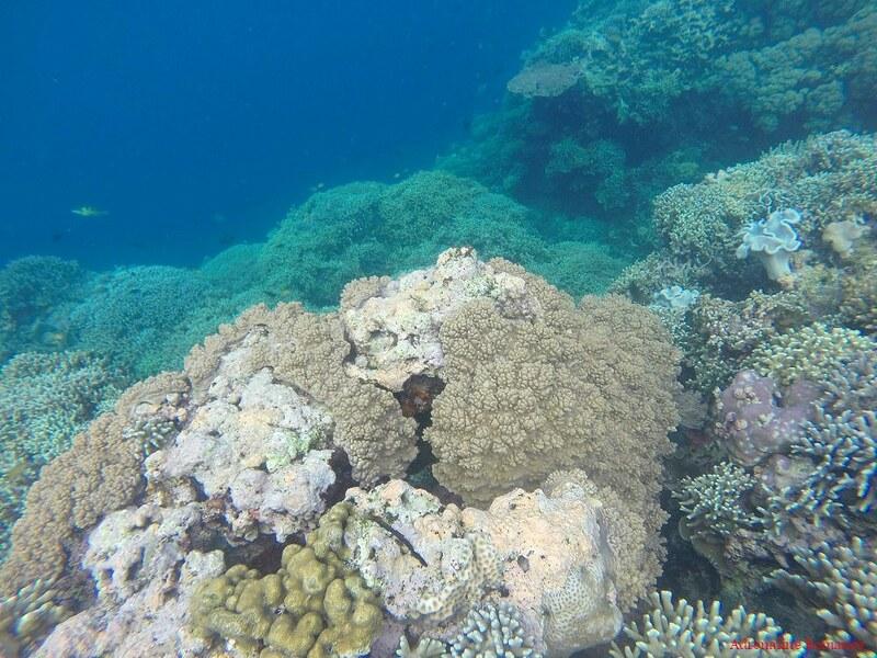 Tuble Marine Sancturary