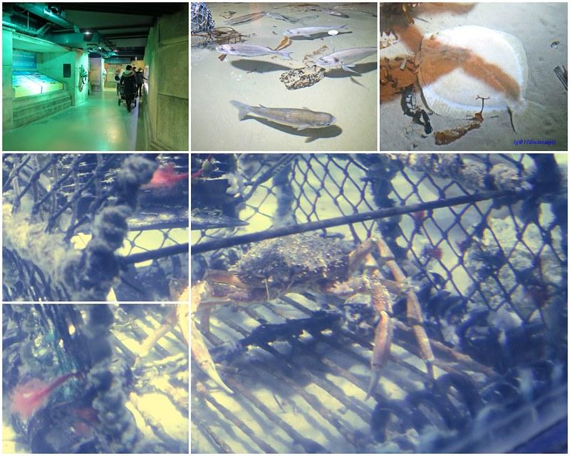 SEALIFELondon Aquarium-KLOOK客路-17docintaipei (8)