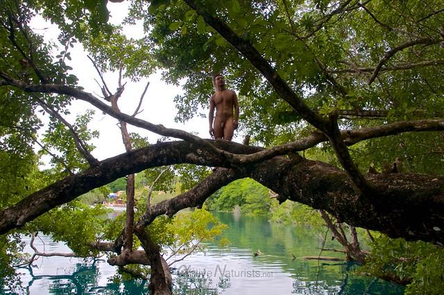 naturist tree 0000 Cenote Azul, Chetumal, Quintana-Roo, Mexico