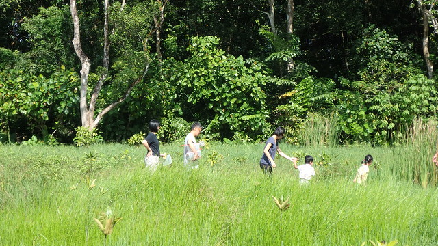 Kids at Junior Wetlands, Sungei Buloh Wetland Reserve