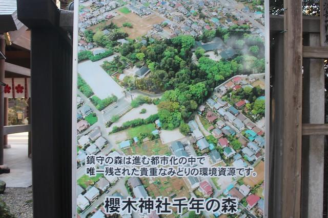sakuragijinja-gosyuin006