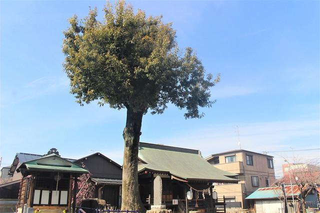 hiyoshihachioji-gosyuin035