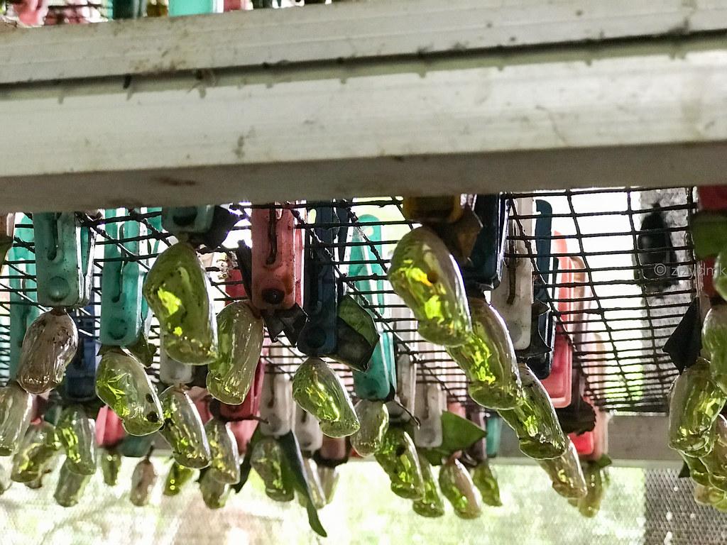 Bali Butterfly Park__0430