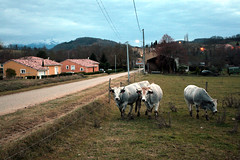 FR11 1469 Limbrassac, Ariège, Midi-Pyrénées - Photo of Arvigna