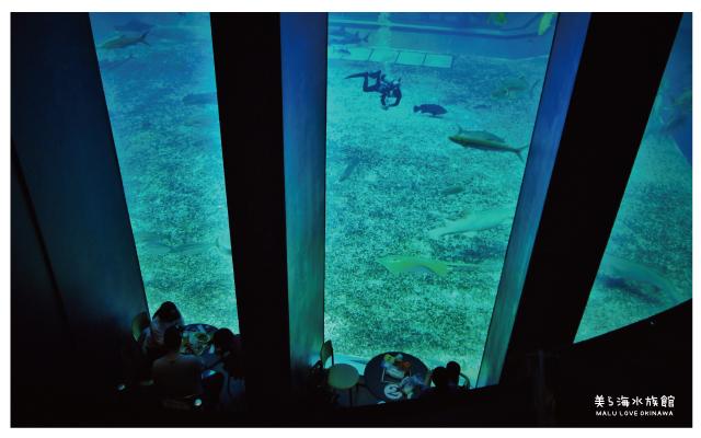 沖繩美麗海水族館-18