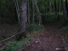 20070903 13060 0710 Jakobus Wald Weg