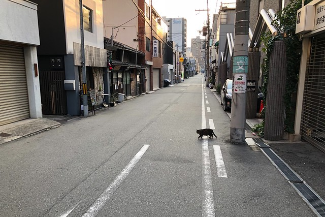 Today's Cat@2018-03-04
