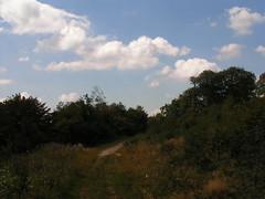 20070831 11945 0707 Jakobus Wald Weg Bäume Wolken