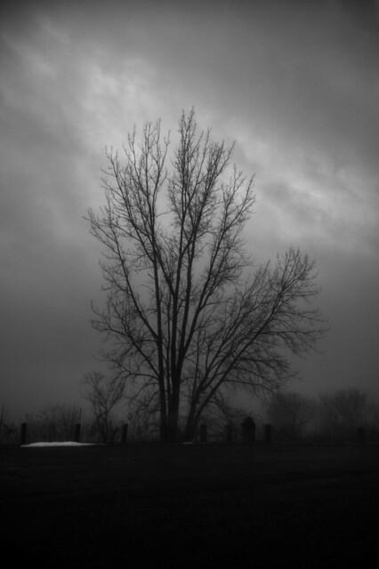 gloom tree b+w