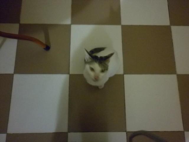 mèo, Panasonic DMC-F3
