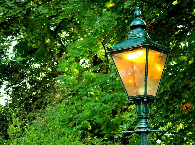 Daytime light in the park