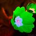 Flower_IMG_0118