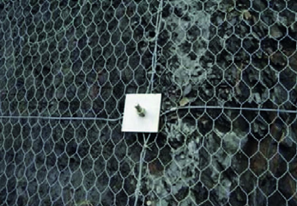 Рис. 8. Анкерное крепление в месте пересечения продольного и поперечного каната «Стилгрид BO»