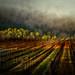 ''As the Morning Sun Breaks Through the Winter Fog'' by Nancy Goodenough