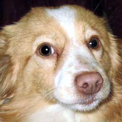 Cani in adozione: quattordici nuovi esemplari ospitati nel Canile Sanitario