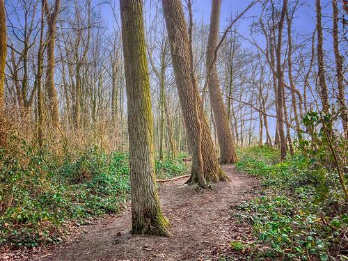 In het bos -2-