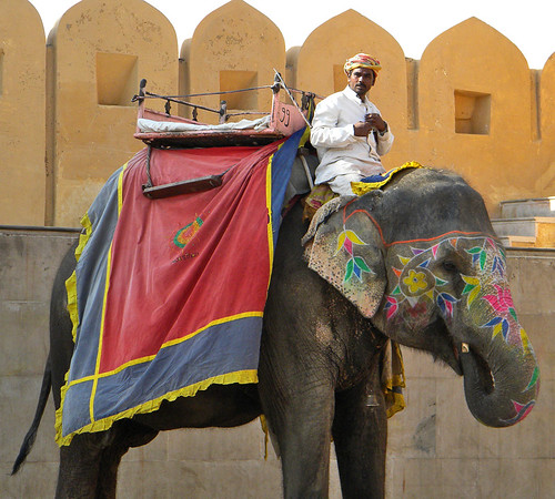 Elephant rides anyone? (at Amber Fort near Jaipur in India)