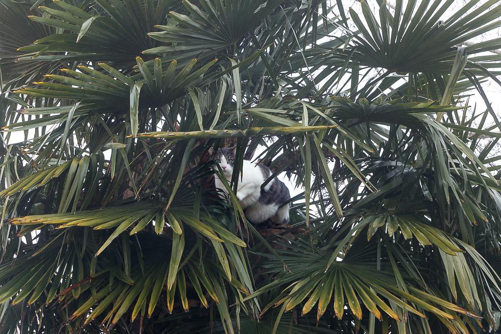 canelle dans le palmier