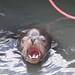 Sea Lion por Bucky-D