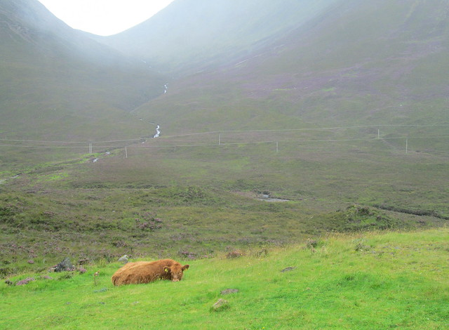Highland Cows on Skye 3
