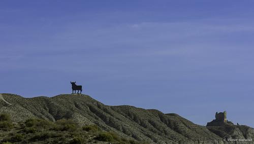 Toro y Castillo Alfajarín