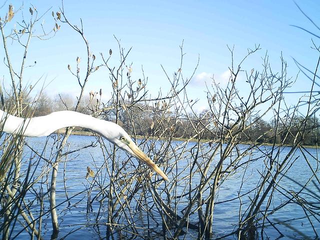 Testwood Lakes Jan 2018