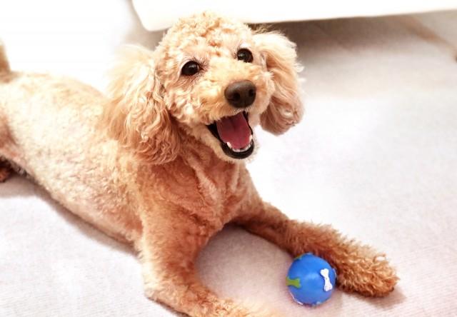 ご機嫌におもちゃで遊ぶ犬