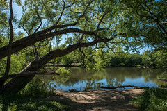 Leon Creek - O. P. Schnabel Park - San Antonio - Texas - 23 April 2017